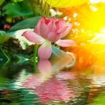 Chapter 7 - Do We Serve the Lotus or Do We Serve the Pond?